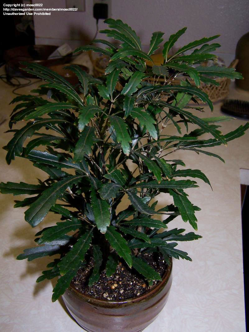 Растения редкие комнатные растения